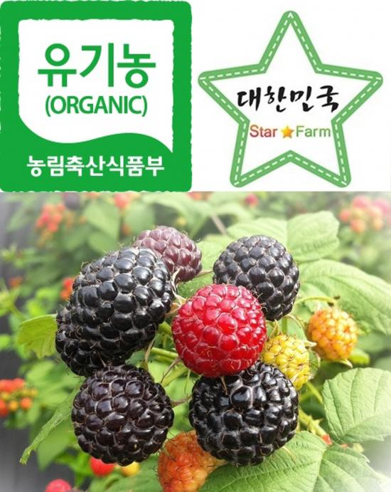 <냉동>유기농 복분자 4kg