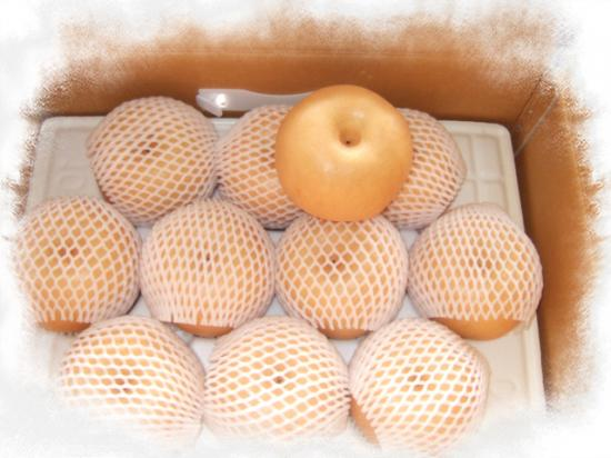 신고배 1호 (7.5kg (9~10과))