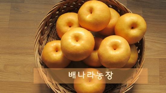 화산배(11~12과) 1박스..