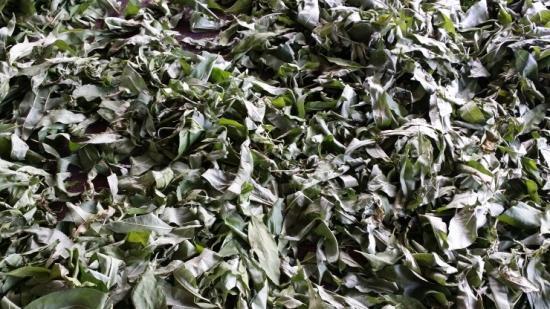 복숭아 잎